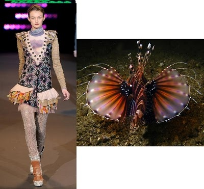 Custo Barcelona Lion Fish inspired collection