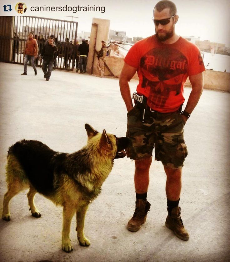 Henry Cavill on set for #sandcastle with a dog from  @caninersdogtraining . ・・・ Here's Aika again with @henrycavill at the #sandcastle movie set ✔ #caninersdogtraining #jo #jordandog #instadogs #beautifuldogs #DDR #cute #dreamdogs #doggies #black #tan #color #mydog #dogtraining #allaboutdogs #germanshepherd #workingdog #workline #showdog #showline #GSD #dog #doglovers #puppies #puppy #pyppytraining #training #puppylovers