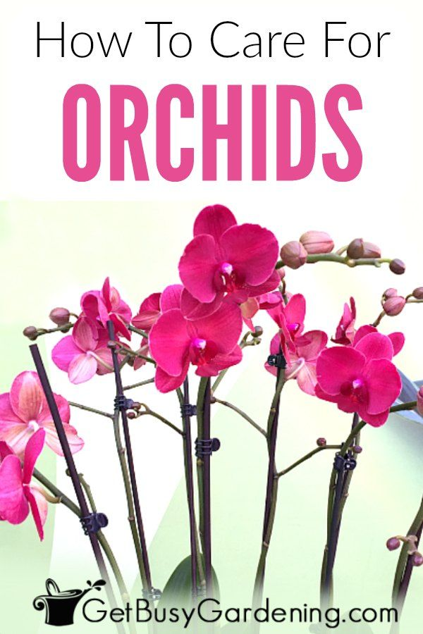 How To Care For An Orchid Plant Orchid Plant Care Orchid Care