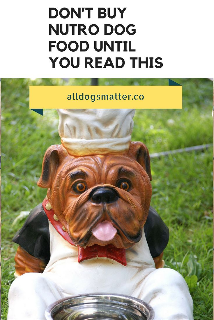 http://alldogsmatter.co/dont-buy-nutro-dog-food-read/