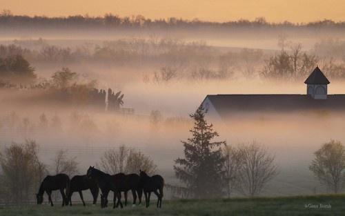 Kentucky Horse Farm at Dawn.