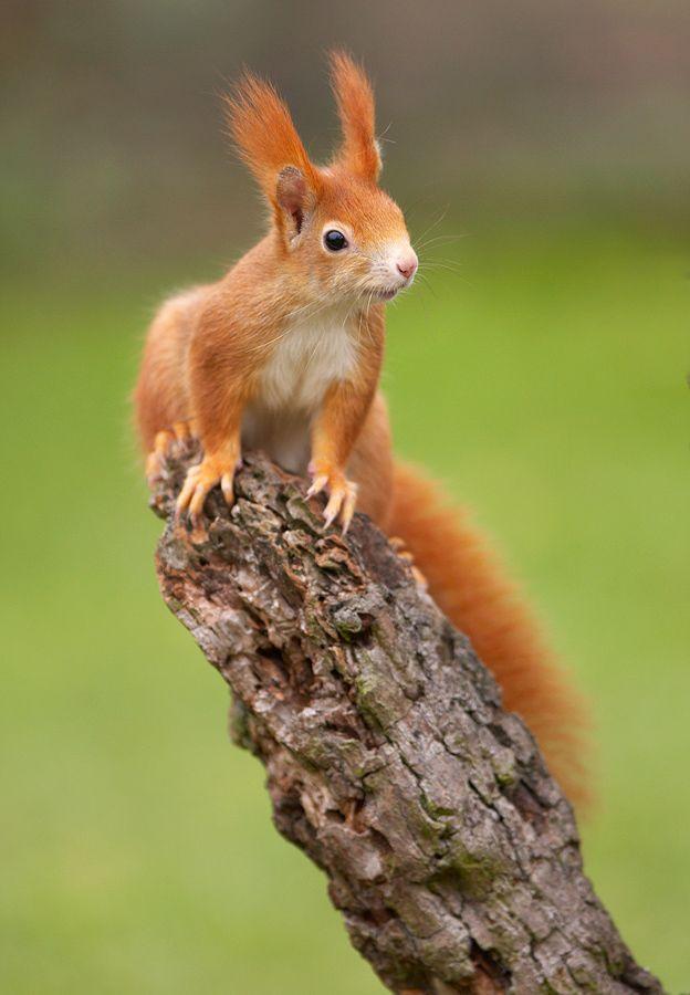 Eichhörnchen                                                                                                                                                      Mehr