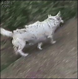 This dog who learned you only need a slope and gravity to have fun. | The 47 Absolute Greatest Dog GIFs Of 2013