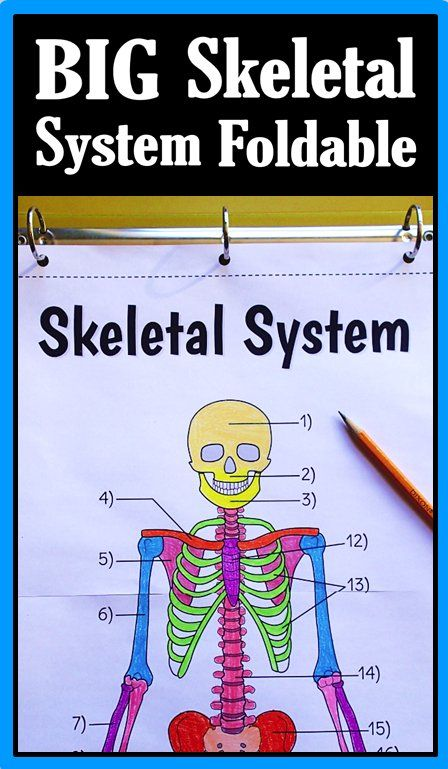 25+ best ideas about Human skeleton labeled on Pinterest | Human ...