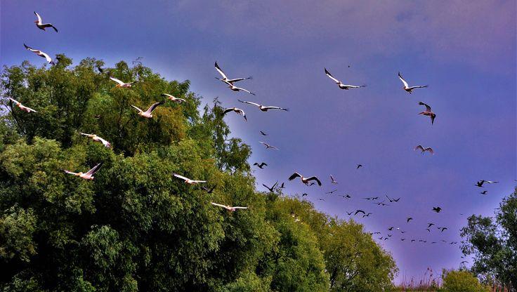 Danube Delta, #Romania http://www.touringromania.com/tours/long-tours/supreme-adventure-danube-delta-private-tour-6-days.html