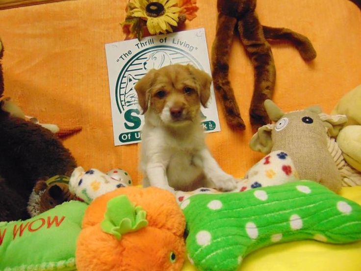 Adopt Seinfeld on Petfinder New puppy, Adoption, Terrier