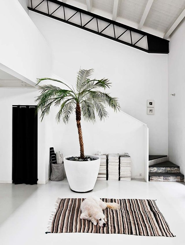 giant potted palm in the entry