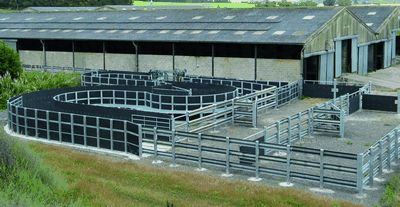 cattle handling equipment | Back to basics: Getting cattle handling systems right