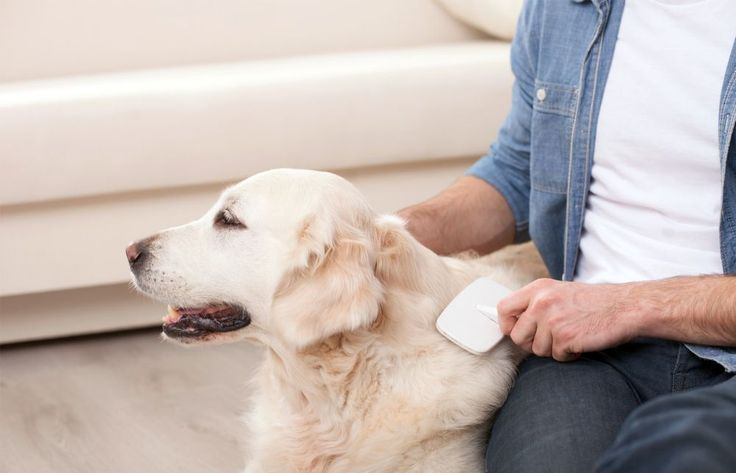 The Art of Grooming Your Dog, Save more with Petsmart