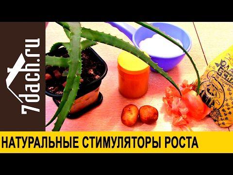 Как приготовить стимуляторы роста из алоэ, картофеля, золы, луковой шелухи и меда  - 7 дач - YouTube
