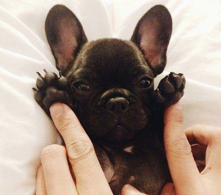 Looks so cute! (Dosent it look like he has bat ears; He is so cute! but dosent it?)