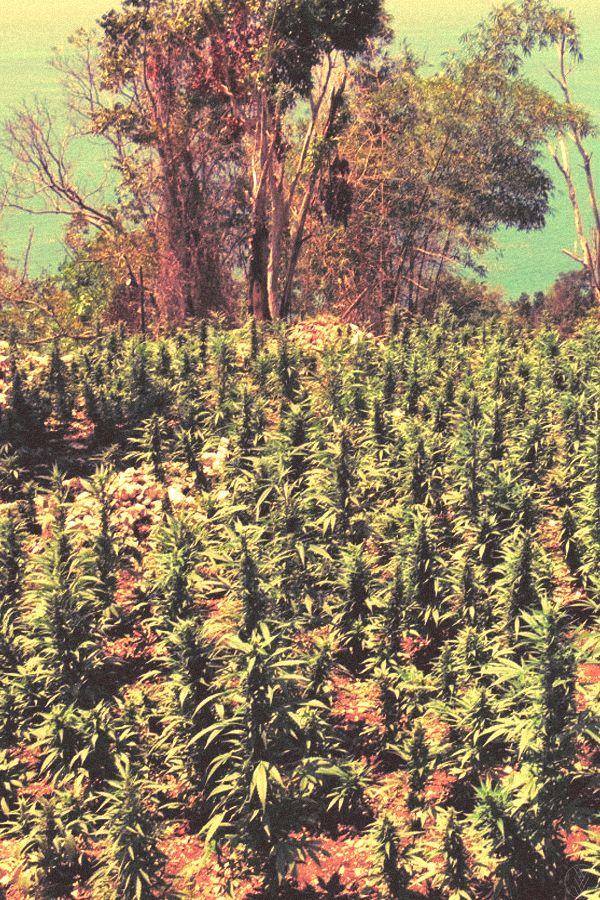 Beautiful field of medicine (: