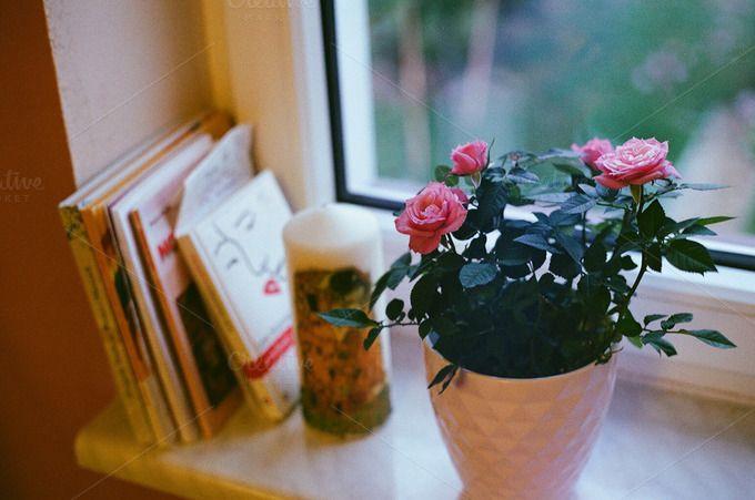 Pink roses on a windowsill by Kasia Górska on @creativemarket