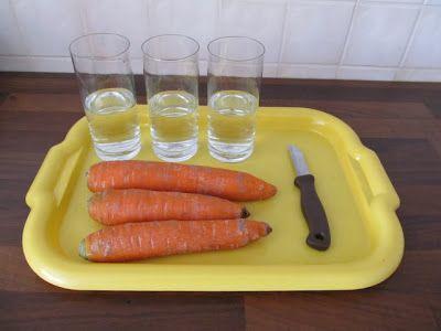Wczesna Edukacja Antka i Kuby : Proste eksperymenty dla dzieci z marchewką w roli głównej