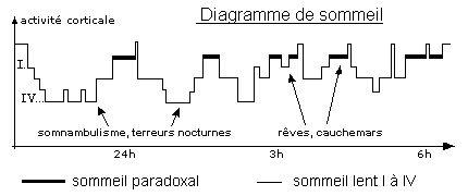 Sommeil paradoxal et physiologie du rêve