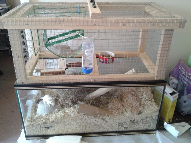 The 25 best gerbil cages ideas on pinterest types of for Fish tank for hamster