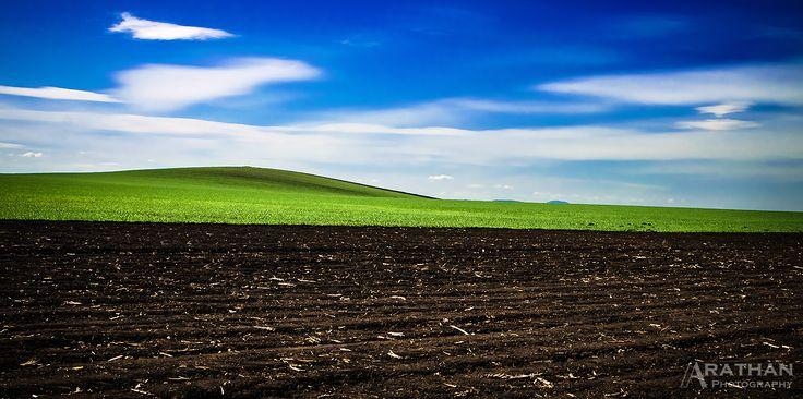 Landscape - Austerlitz