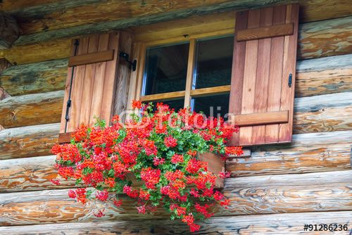 #window #building #house #flowers #wooden #house