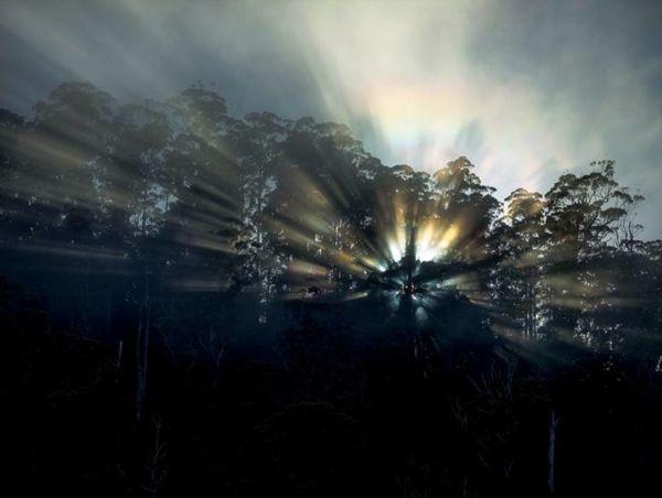 .au Steve Parish, Australia's most recognised wilderness photographer ...