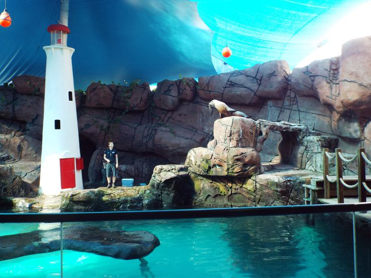 The Seal show at sea Life Mooloolaba is entertaining and educational.