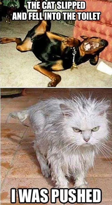 56 best Funny and Crazy Photos images on Pinterest | Funny ...