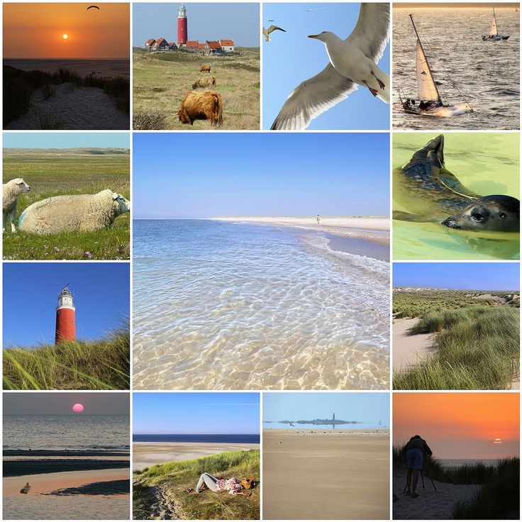 B℮n posted a photo:  © all rights reserved by B℮n  Texel is an island in the province of North Holland in the Netherlands. It is the largest and most populated island of the West Frisian Islands in the Wadden Sea. The island is situated north of Den Helder. The dune landscape on Texel is a unique habitat for wildlife. Notable areas include De Slufter, where the tide comes in and meets the dunes, forming a marshy environment rich in both fauna and flora. Texel is known for its wildlife…