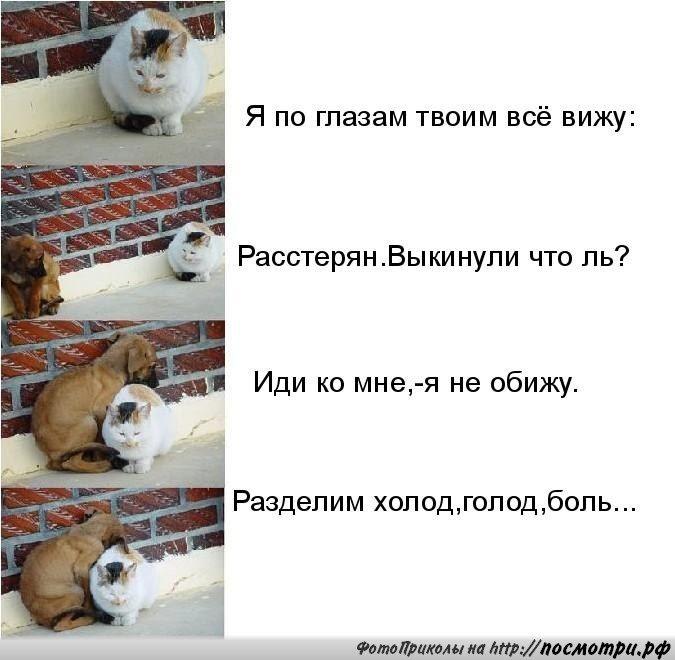 КОТовасия - Коты и кошки