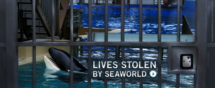 Incidents At Seaworld Parks: Animal Rights