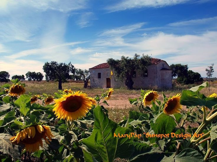 chapel with sunflowers by marypap