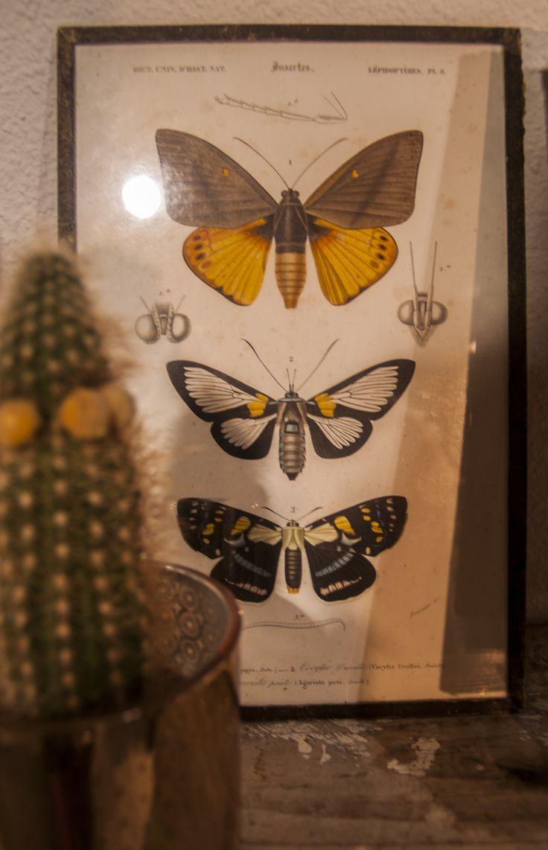 Detail foto