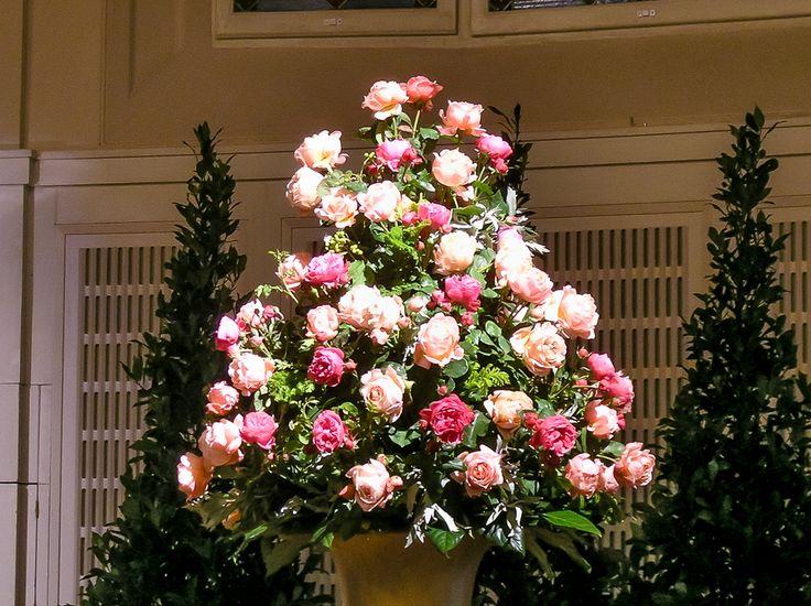 rosetree, pink