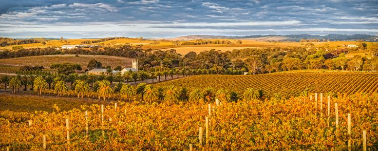 https://flic.kr/p/vzYN5L | Barossa Colours | Thanks for taking the time to have a look. Feel free to leave comments. To check out my web site look at www.daviddahlenburg.com