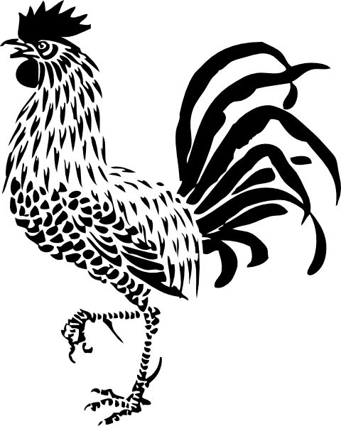 rooster drawing - Google Search