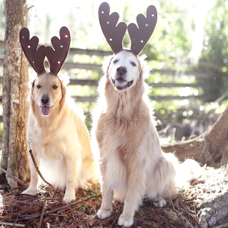 Santa's Reindeer!  Cute dog Christmas Outfits for Christmas Photos!