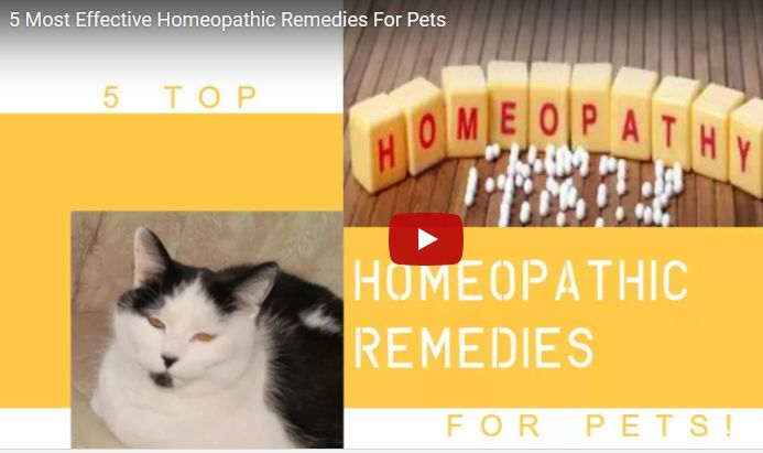 benefits of homeopathy, best homeopathic doctor, classical homeopathy, homeo treatment, Homeopathic Clinic, Homeopathic Latest Video Updates, homeopathic materia medica, Homeopathic Pharmacy, homeopathic products, homeopathic remedies, Homeopathic Video Course, homeopathy courses, homeopathy for cancer, homeopathy for depression, homeopathy remedy, homeopathy software, homeopathy treatment, Homeopathy Video, homoeo remedies, homoeopathic repertory, Latest Homeopathy Video Course, Video…