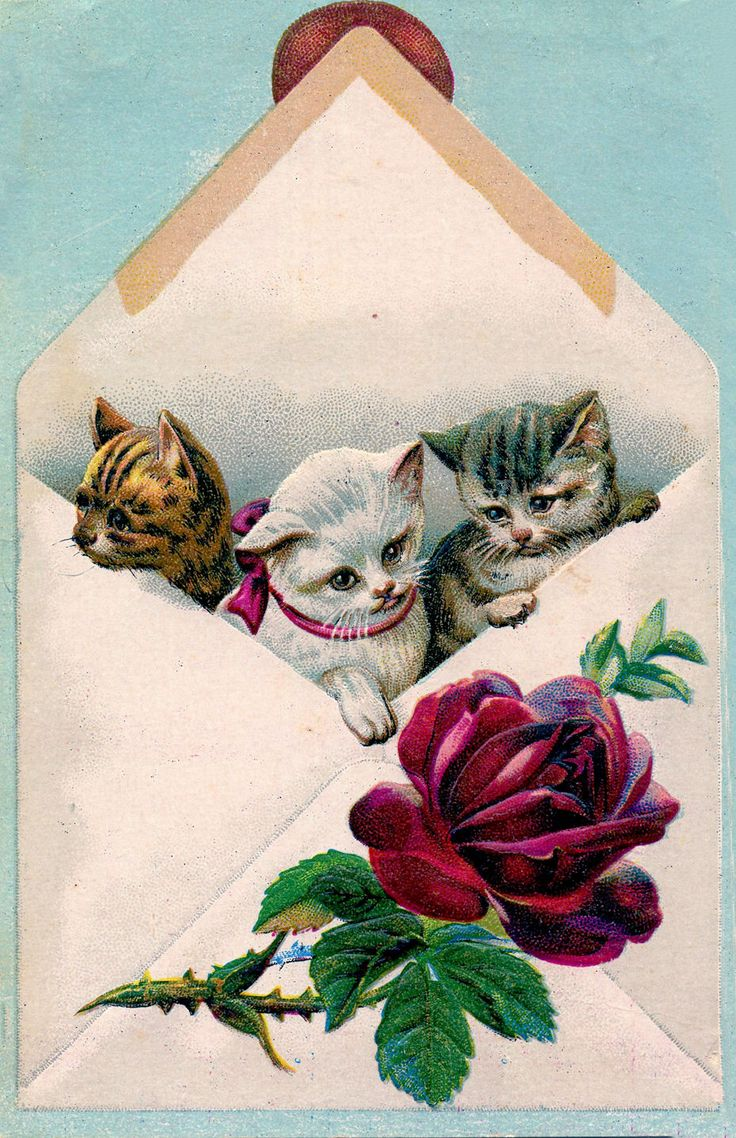Cats in Envelope, vintage image from The Graphics Fairy.