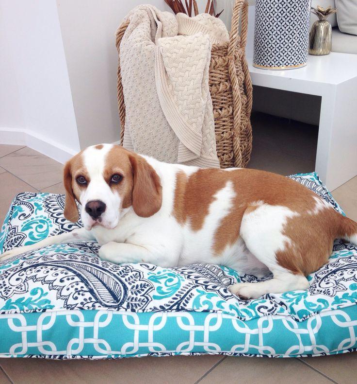 Aqua floral designer pet bed