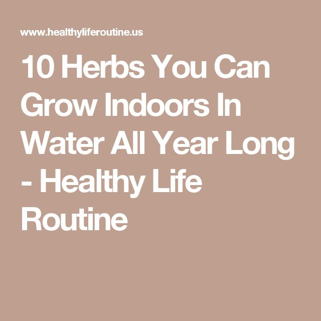 10 Herbs You Can Grow Indoors In Water All Year Long - Healthy Life Routine