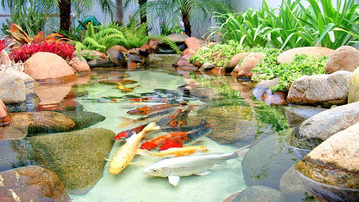 Carpas ornamentais em um laguinho que compõem o paisagismo de residência