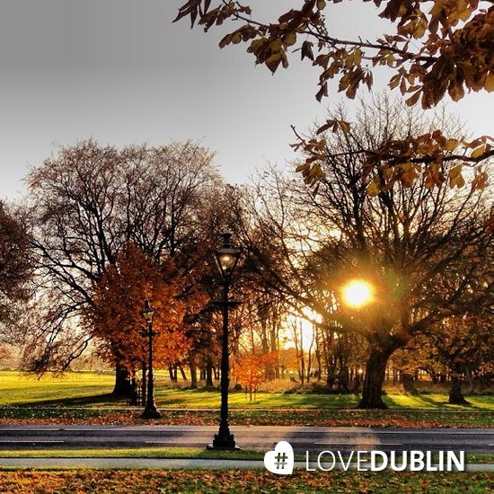 The Phoenix Park Dublin is not to be missed at any time of year but especially in the autumn. A riot of colour explodes. A beautiful shot captured in the moment by @marieforan2 #LoveDublin http://bit.ly/1avcKaw