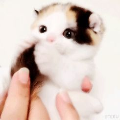 How to break imgur - cutest kitten ever!