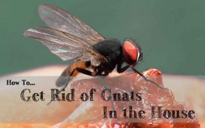 http://www.gettingridofgnats.com/how-to-get-rids-of-gnats-in-kitchen-effectively/