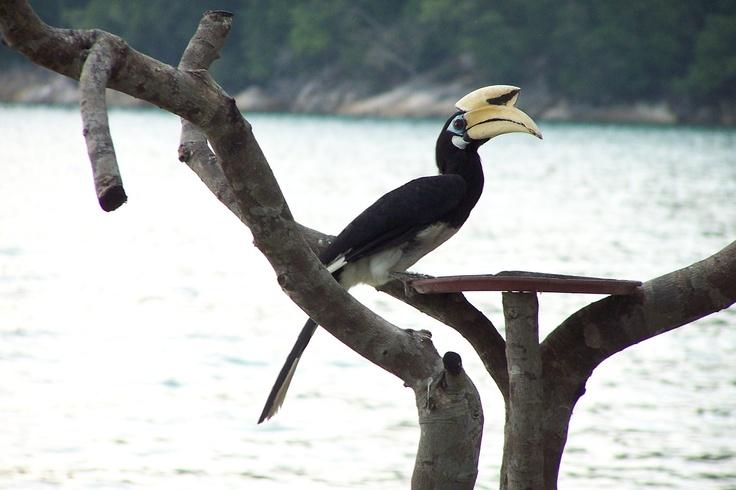 Maleisië, Pangkor
