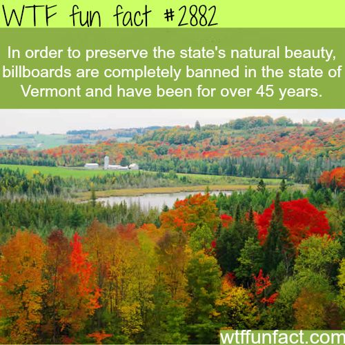 The beauty of Vermont -  That's awesome!