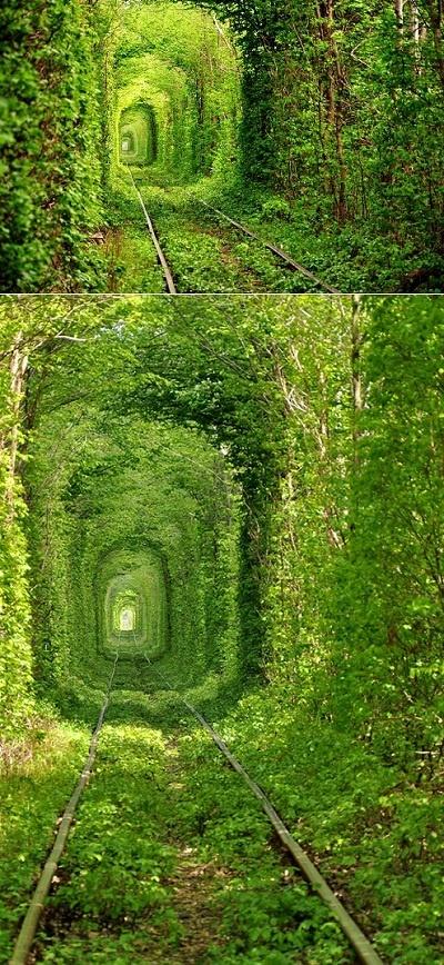 Tree Train Tunnel in Ukraine