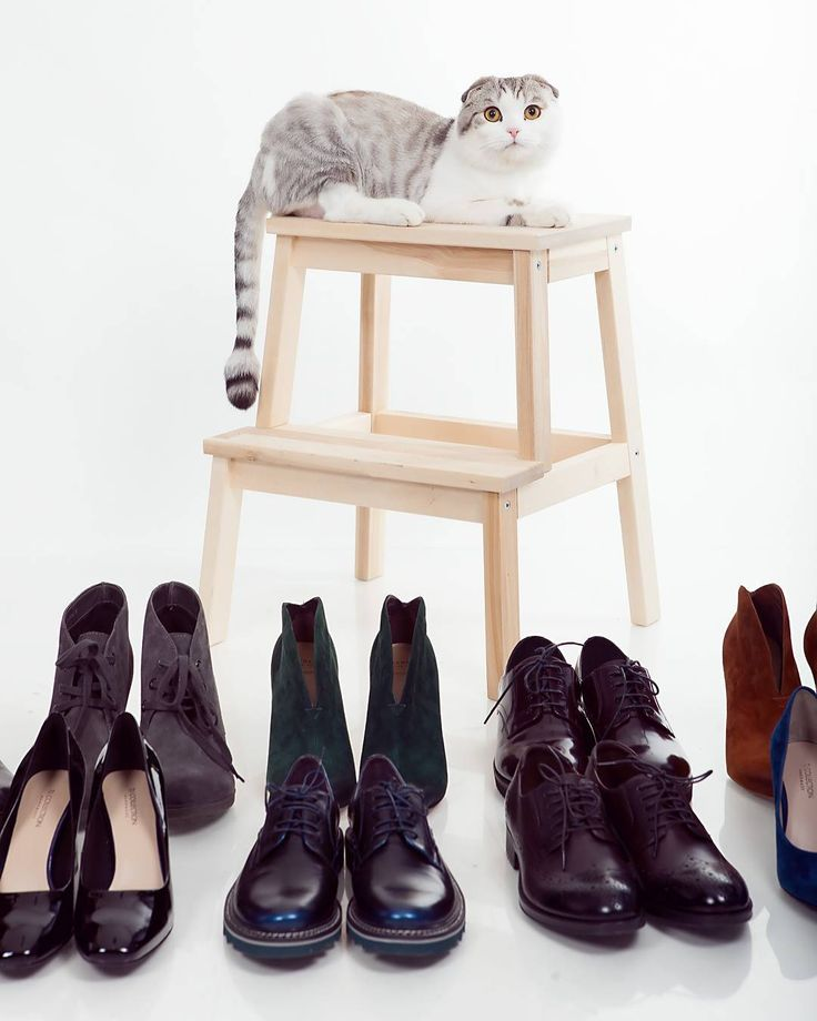 Когда кот стилиста временно живет в фотостудии, у него всегда есть право голоса, какие туфли выбрать к платью, какое украшение лучше😄 Да и, кажется, фотографий профессиональных у него теперь больше, чем у некоторых людей📷  Фото @malinnikov_photo Обувь - магазин Chester #конкурспетбург