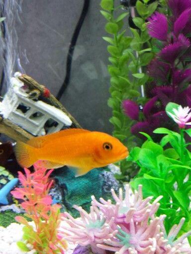 fish named