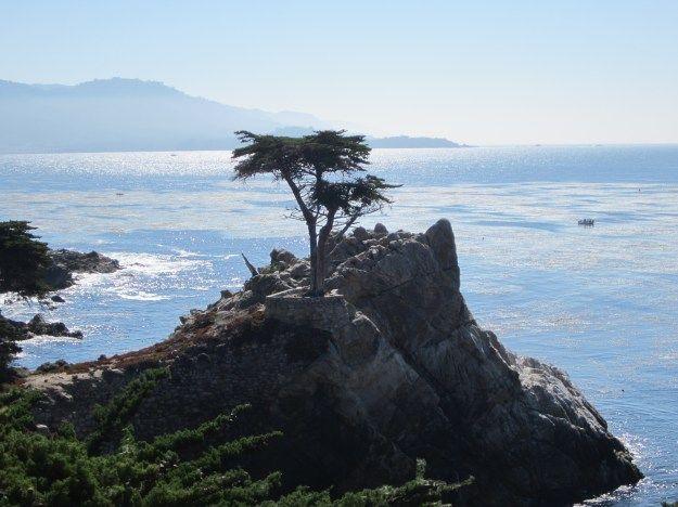 17 Mile Drive: A Scenic Drive along the Monterey Peninsula in Pebble Beach, California Lone Cypress
