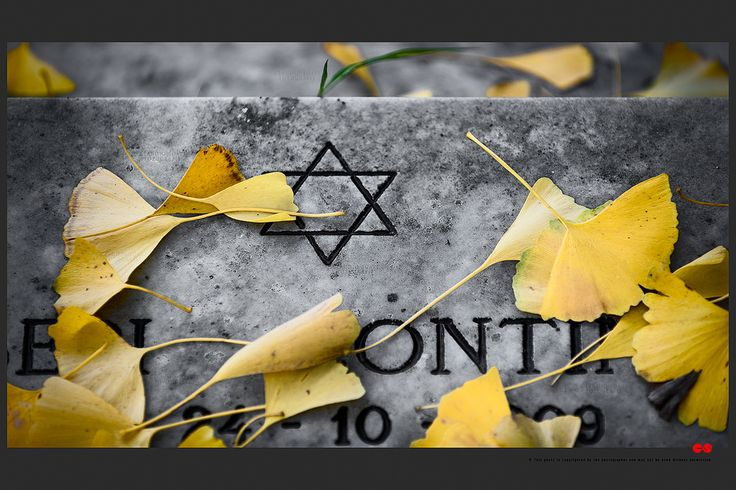 https://flic.kr/p/BaHTki | Autumn at the Jewish cemetery in Ferrara | © This photo is copyrighted by the photographer and may not be used without permission.