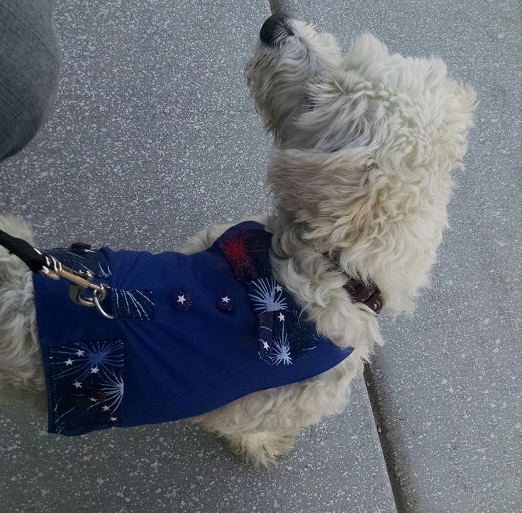 38 besten dog harness Bilder auf Pinterest   Hund, Kleidung und ...